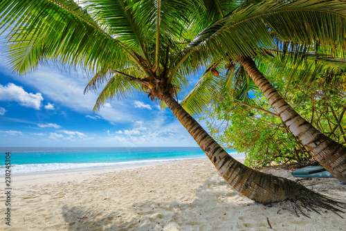 Foto auf AluDibond Karibik Untouched sandy beach with palm and turquoise sea on Jamaica island. Summer vacation and travel concept.