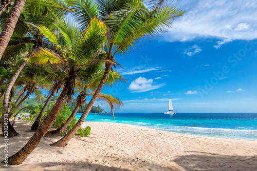 Obraz Exotic sunny beach with palm and a sailing boat in the turquoise sea on Hawaii paradise islands. Summer vacation and tropical beach concept. - fototapety do salonu