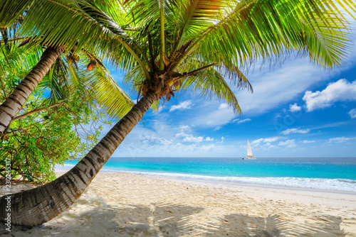 Foto auf AluDibond Lateinamerikanisches Land Exotic sandy beach with palm and a sailing boat in the turquoise sea on Jamaica paradise island. Summer vacation and travel concept.