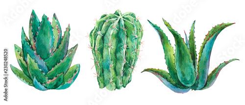 Leinwandbilder - Exotic natural vintage watercolor cactus greeting card