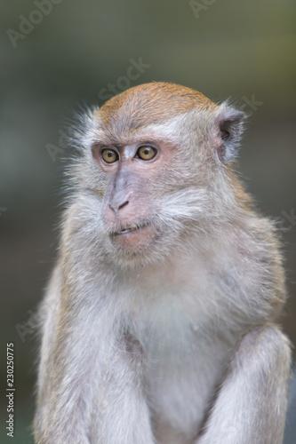 In de dag Aap monkey closeup