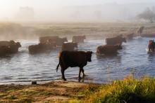 Przeprawa Krów Przez Narew