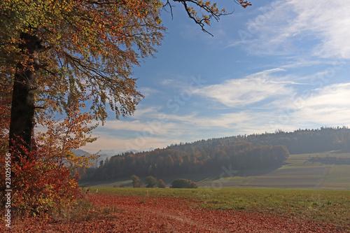 Foto op Canvas Heuvel Herbstwald, Köniz bei Bern, Schweiz