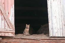 Cat Sitting In The Attic In The Hayloft.