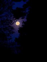 Full Moon Through Trees In Sil...