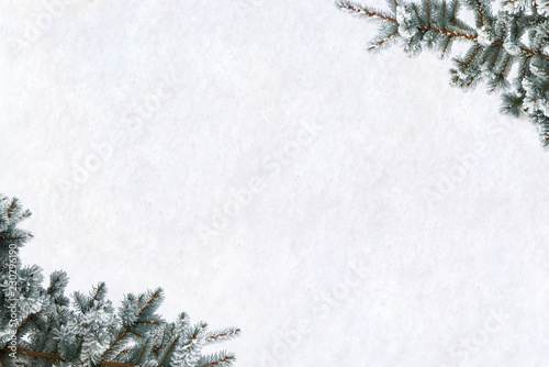 Frame of twigs of christmas tree (spruce Picea pungens) covered hoarfrost and in snow on snow with space for text. Top view, flat lay. Christmas decoration.