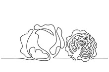 Continuous One Line Drawing. Vegetables Two Cabbage. Vector Illustration