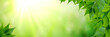 canvas print picture - Panorama Of Fresh Green Leaves And Sunlight