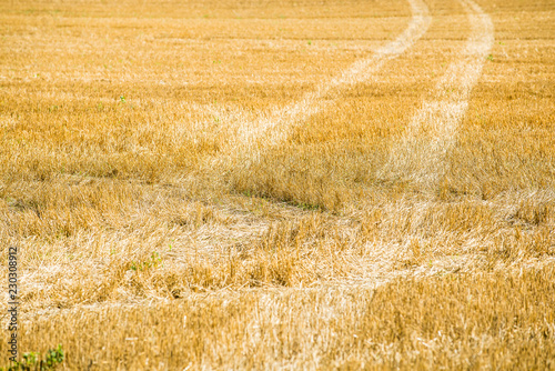 Country agricultural field, close-up, Estonia
