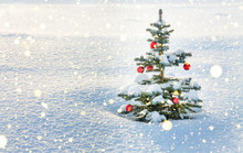 Winter Landscape With Christmas Fir Tree Decoration Red Ball