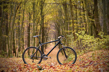 Bicycle In Mystic Autumn Park Or Forest. Healthy Lifestyle Concept.