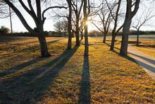 Sunburst Tree Silhouette