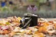 Analogkamera mit Sträußchen Lavendel und umgeben von bunten Herbstlaub