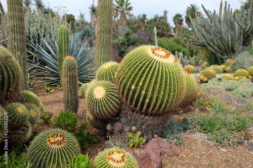 Spoed Foto op Canvas Cactus Cactus plants
