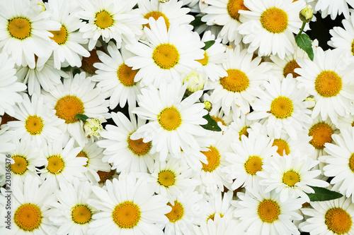 In de dag Madeliefjes daisy flowers texture