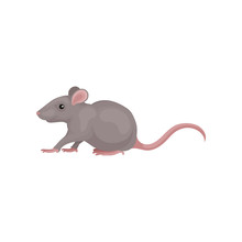 Grey Mouse Rodent Animal Vecto...