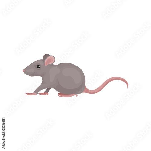 Fotografie, Obraz Grey mouse rodent animal vector Illustration on a white background