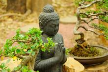 Buddha Statue With Bonsai Tree...