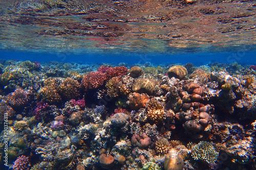 Foto op Canvas Koraalriffen coral reef in Egypt