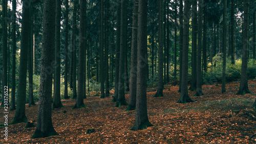 Rote Blätter im Herbstwald Canvas-taulu
