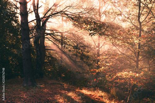 Wald mit Sonnenstrahlen Canvas-taulu