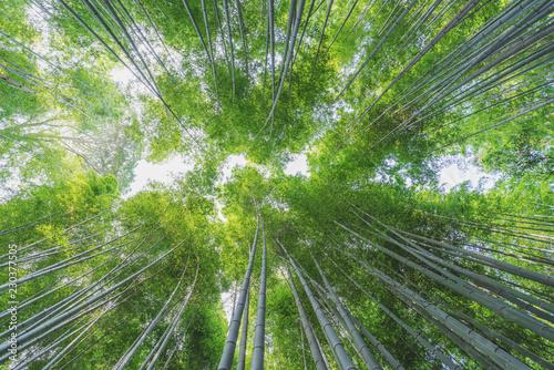 Foto op Aluminium Bamboo Bamboo grove at Arashiyama bamboo forest in Kyoto, Japan