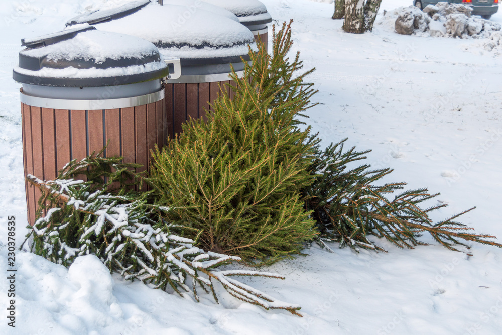Fototapeta Used christmas trees in dumpster after the holiday