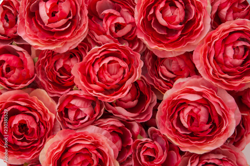 mata magnetyczna background of red roses