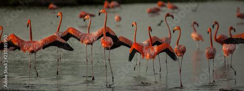 Acrylic Prints Natuur Bonaire