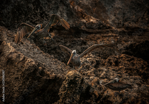 Fototapeten Natur Bonaire