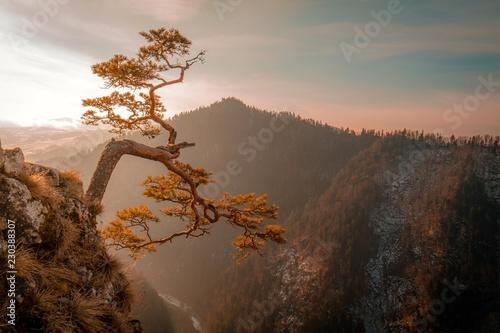 osamotnione-drzewo