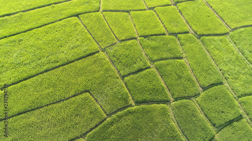 Foto op Aluminium Rijstvelden Aerial view rice green field