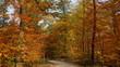 einsamer romantischer Weg führt durch bunten Laubwald im warmen Sonnenlicht
