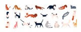Pakiet uroczych kotów różnych ras siedzących, leżących, spacerujących. Zestaw ślicznych zabawnych zwierząt domowych lub zwierząt domowych w kolorowe płaszcze na białym tle. Ilustracja wektorowa płaski kreskówka.