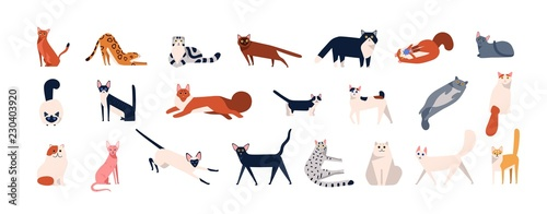 Bundle of adorable cats of various breeds sitting, lying, walking Tableau sur Toile