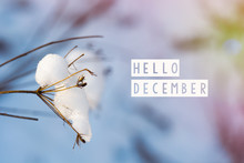 Hello December (winter) Card