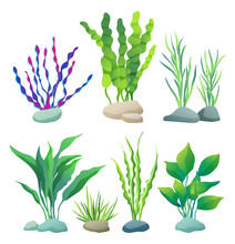 Sea Or Aquarium Algae Types Co...