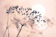 canvas print picture - Samen von wilder Pflanze mit hellem Hintergrund und weichem Effekt stille und reine Stimmung Winter