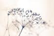 Leinwandbild Motiv Samen von wilder Pflanze mit hellem Hintergrund und weichem Effekt stille und reine Stimmung Winter