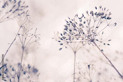 Samen von wilder Pflanze mit hellem Hintergrund und weichem Effekt stille und re Canvas Print