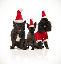 Christmas Group Of Three Santa Cats And Dogs Sitting