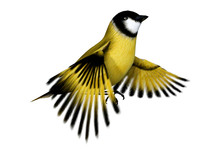 3D Rendering Songbird Goldflinch On White