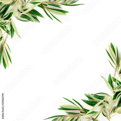 An overhead photo of a frame of olive tree branches with a place for text, shot from above on a white background with copyspace