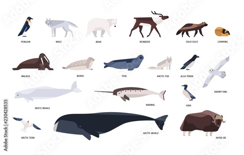 Photo Collection of cute polar animals, birds, marine mammals inhabiting Arctic and Antarctica isolated on white background