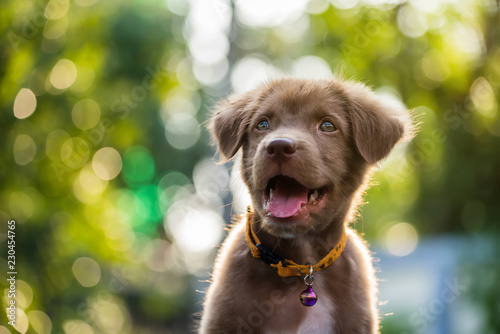 Foto labrador retriever puppy with natural bokeh