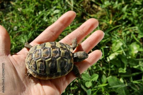 Foto op Aluminium Schildpad hand and small turtle