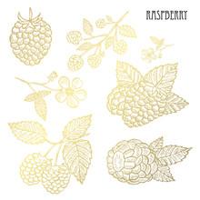 Hand Drawn Golden Fruits Set