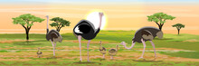 A Flock Of African Ostriches From The Male, Two Females And Their Chicks. Wildlife Of Africa. Realistic Vector Landscape