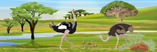 A Flock Of African Ostriches From The Male, Female And Their Chicks. Wildlife Of Africa. Acacia, Baobab And Dracaena Trees. River. Realistic Vector Landscape