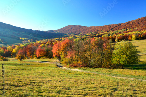 Poster Miel Beautiful colors of autumn in october, Low Beskids (Beskid Niski)